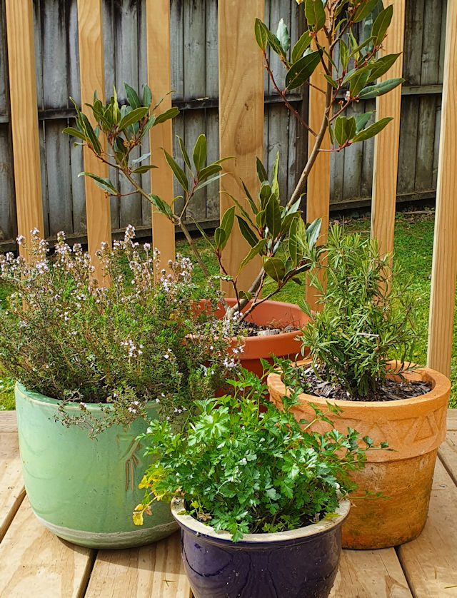 Tips - growing your own herbs